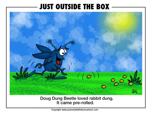 Doug dung beetle loves rabbit dung