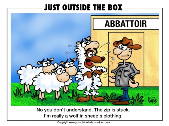 sheep at the abattoir