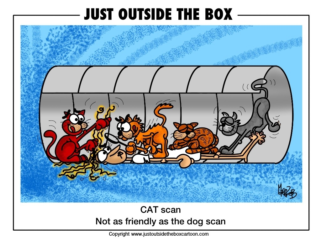 Image result for cat scan humor